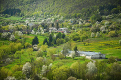 Paesaggio agricolo della primavera con tutto il tipo di alberi del fiore in giardino sotto le colline - cooperativa - coltivi sul Fotografie Stock
