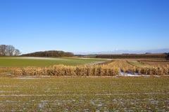 Paesaggio agricolo nell'inverno Immagini Stock Libere da Diritti