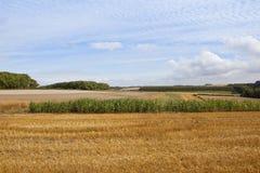 Paesaggio agricolo scenico Fotografia Stock Libera da Diritti