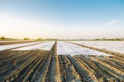 Paesaggio agricolo Verdure organiche crescenti in piccole serre Irrigazione a goccia Spunbond da proteggere da gelo e immagine stock libera da diritti
