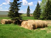 Paesaggio Alberta Hay Fotografia Stock