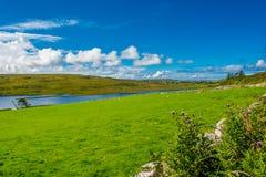Paesaggio alla costa dell'Irlanda Fotografie Stock Libere da Diritti