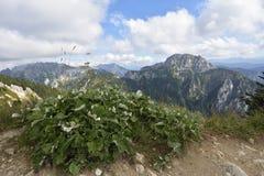 Paesaggio alpino Fotografia Stock