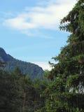 Paesaggio alpino con abete e la foresta verdi in priorità alta e montagna con il cielo nel fondo Fotografia Stock