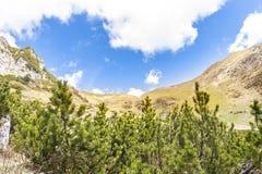 Paesaggio alpino con gli alberi Immagini Stock