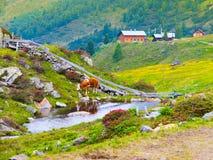 Paesaggio alpino con insenatura, la mucca ed il cottage di mountin Fotografia Stock