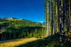 Paesaggio alpino con le montagne e le foreste in Austria Fotografia Stock Libera da Diritti