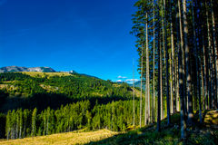 Paesaggio alpino con le montagne e le foreste in Austria Fotografie Stock