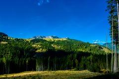 Paesaggio alpino con le montagne e le foreste in Austria Immagini Stock