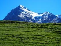 Paesaggio alpino della gamma di montagne vicino al villaggio di GRINDELWALD nelle ALPI svizzere di bellezza in SVIZZERA Fotografie Stock