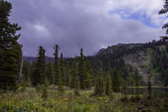Paesaggio alpino della montagna con il lago e la foresta Karakol Fotografia Stock Libera da Diritti