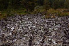 Paesaggio alpino della montagna con le rocce ed il muschio Fotografia Stock