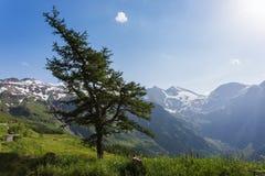 Paesaggio alpino della montagna di estate Immagine Stock Libera da Diritti