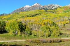 Paesaggio alpino della tremula gialla e verde e delle montagne innevate durante la stagione di fogliame Immagini Stock