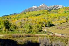 Paesaggio alpino della tremula gialla e verde e delle montagne innevate durante la stagione di fogliame Immagine Stock