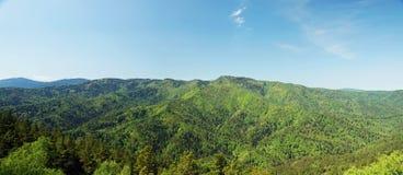 Paesaggio alpino di estate con le montagne boscose verdi Immagini Stock