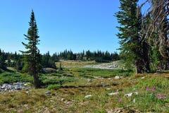Paesaggio alpino nelle montagne dell'arco della medicina del Wyoming Immagini Stock Libere da Diritti