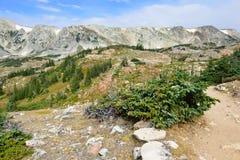Paesaggio alpino nelle montagne dell'arco della medicina del Wyoming fotografie stock libere da diritti