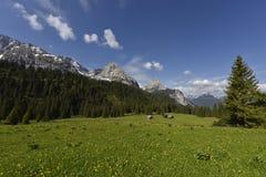 Paesaggio alpino tipico con le piccole capanne su un pascolo alpino e sulla catena montuosa del ` di Mieminger Kette del `, Tirol Immagine Stock