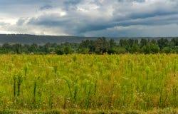Paesaggio - alta erba verde e cielo nuvoloso Immagine Stock