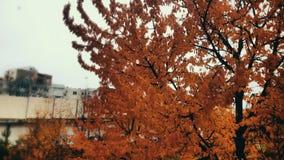 Paesaggio Antumn fotografia stock
