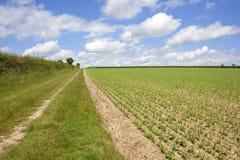 Paesaggio arabile con il giacimento del pisello Immagine Stock Libera da Diritti