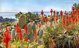 Paesaggio arancio dell'oceano Pacifico di mattina del cactus dell'aloe del fico d'India Fotografia Stock Libera da Diritti