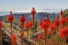 Paesaggio arancio Santa Barbara California del cactus dell'aloe Fotografia Stock Libera da Diritti