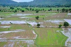 Paesaggio archivato riso visto da sopra; kanchanaburi Tailandia Fotografia Stock Libera da Diritti