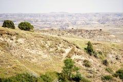 Paesaggio arido con il bisonte immagini stock libere da diritti