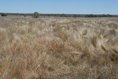 Paesaggio arido e piano con erba alta e asciutta, nell'entroterra australiana immagini stock libere da diritti