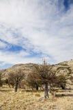 Paesaggio asciutto al parco nazionale di Los Glaciares Immagini Stock