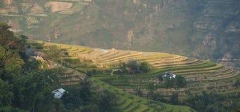 Paesaggio asiatico del villaggio in una zona rurale con la risaia Immagini Stock Libere da Diritti