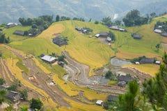 Paesaggio asiatico del villaggio in una zona rurale con la risaia Fotografie Stock Libere da Diritti