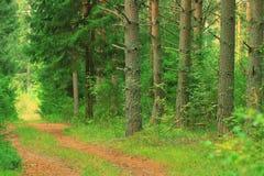 Paesaggio attillato della foresta di estate immagini stock