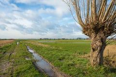 Paesaggio bagnato del ploder un giorno di inverno nuvoloso Immagine Stock