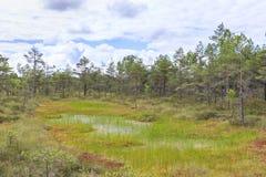 Paesaggio bagnato della palude al giorno di estate fotografie stock libere da diritti
