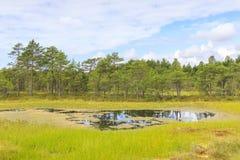 Paesaggio bagnato della palude al giorno di estate immagini stock