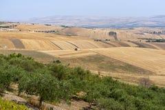 Paesaggio in Basilicata (Italia) Immagini Stock Libere da Diritti