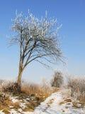 Paesaggio bello di inverno Immagini Stock