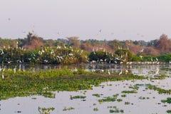 Paesaggio bello di Pantanal, Sudamerica, Brasile Fotografia Stock