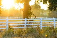 Paesaggio bianco dell'azienda agricola del cavallo quindi immagine stock libera da diritti