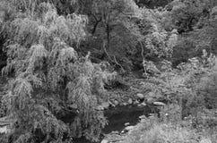 Paesaggio in bianco e nero con gli alberi ed il fiume Fotografia Stock