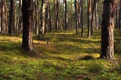 Paesaggio boscoso del boschetto misto della foresta nella stagione di autunno fotografie stock