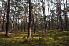 Paesaggio boscoso del boschetto misto della foresta nella stagione di autunno immagini stock