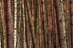 Paesaggio boscoso di un boschetto misto europeo della foresta in autunno fotografie stock