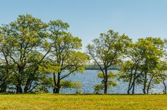 Paesaggio calmo di estate - alberi sulla banca del fiume contro il cielo blu immagine stock libera da diritti
