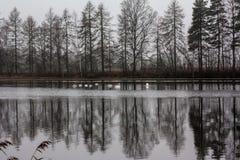 Paesaggio calmo scuro di autunno su un fiume nebbioso con cigni bianchi e riflessione degli alberi in acqua La Finlandia, fiume K immagini stock