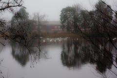 Paesaggio calmo scuro di autunno su un fiume nebbioso con cigni bianchi e riflessione degli alberi in acqua La Finlandia, fiume K immagini stock libere da diritti