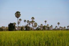 Paesaggio cambogiano della campagna Fotografia Stock